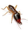 Termites Pest Control