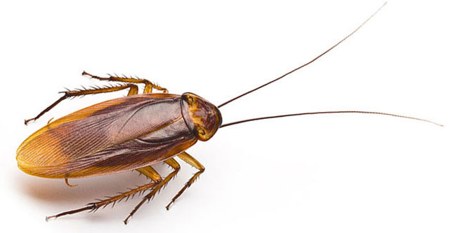Cockroach inspections Service