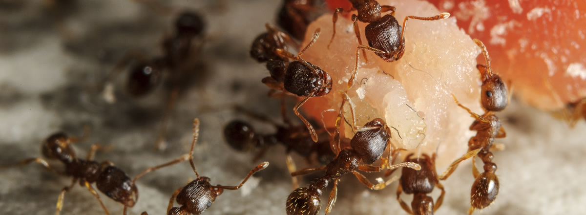 main_ants-how-to-get-rid-header