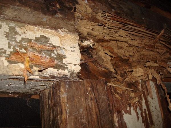 pre-purchase-timber-pest-inspection-progressive-pest-management