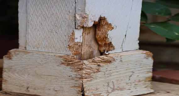 termite-inspection-perth-WA