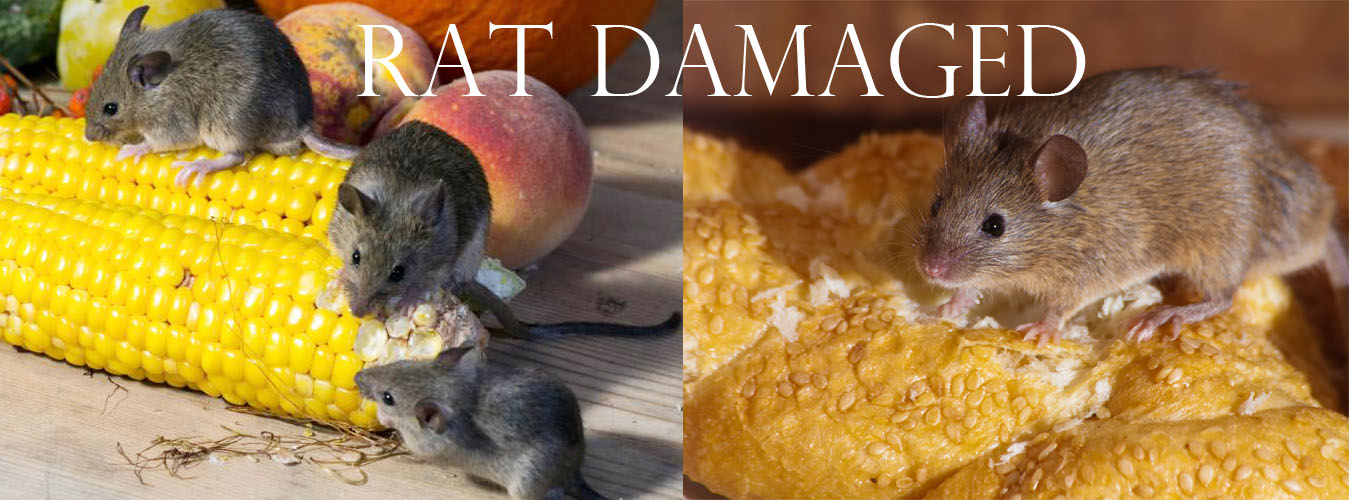 rat-damage2